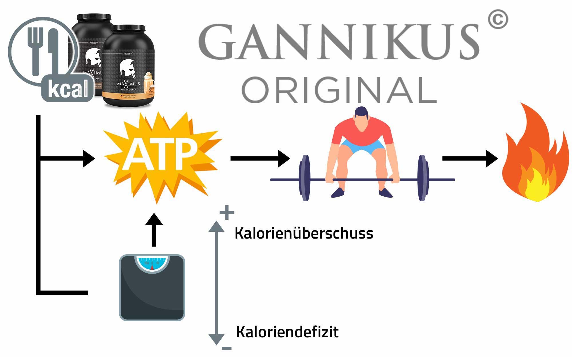 Gannikus Original MAXIMUS Weight Gainer